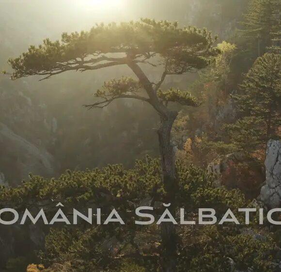 România Sălbatică – teaser